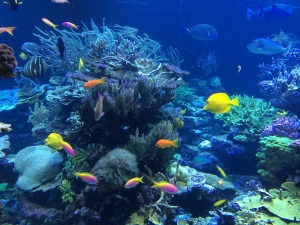 Korallrev1